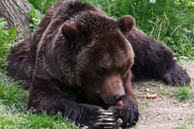 Private Tour from Brasov to the Bears Sanctuary, Rasnov Fortress and Bran Castle
