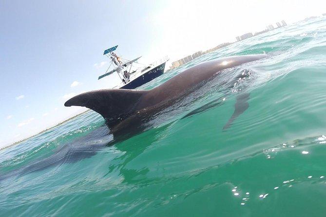 Wild Dolphin Encounter in Puerto Vallarta