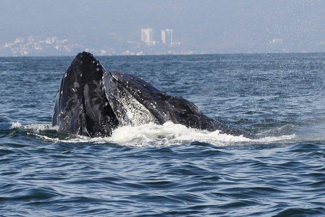 Private Whale Watching Tour in Puerto Vallarta