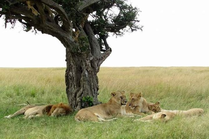 6 Days Kenya Classic Safari