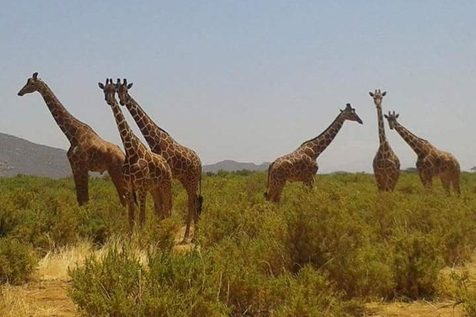 6 Days Kenya Express Safari