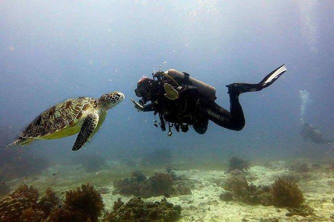 Bohol Dive Courses