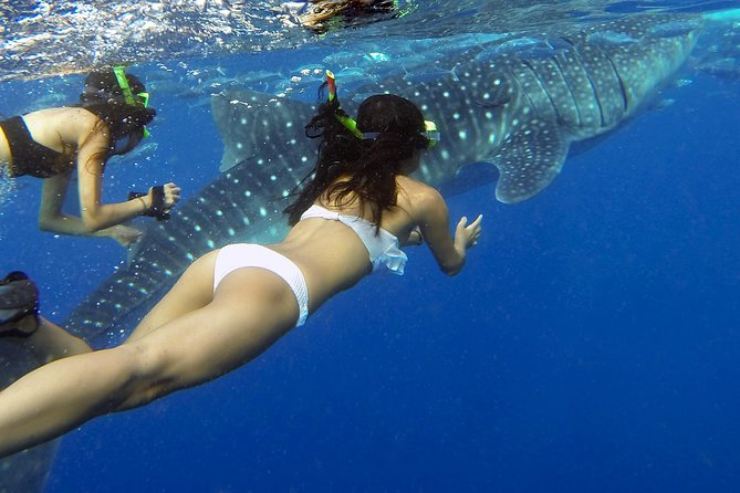 Exclusive or Private From Panglao, Bohol to Oslob Cebu Whale Shark Experience