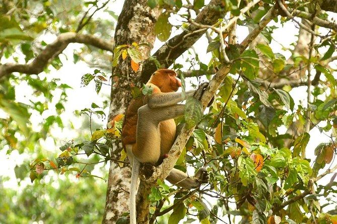 Klias Wetlands Wildlife Cruise and Safari