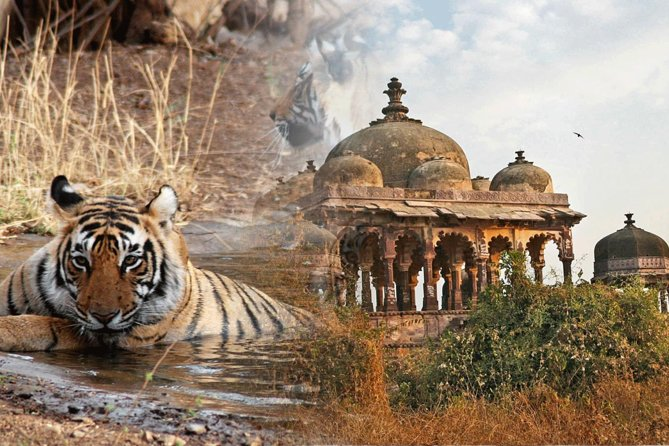 The Golden Triangle with Tigers