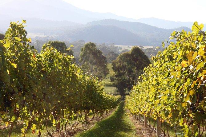Pizzini Weine Old World Flavours New Vintage Weinprobe und Picknick
