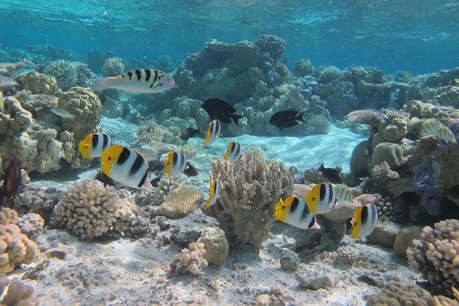 Morning Snorkeling Shared Boat Tour in Bora Bora