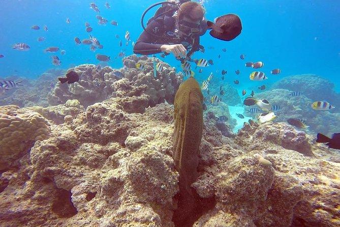 Mergulho autônomo em Bora Bora: Intro privado ou mergulho certificado em um tanque