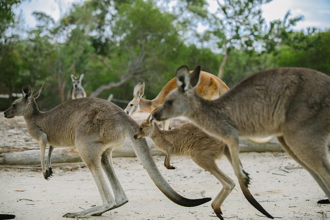 Skip the Line: Australia Walkabout Wildlife Park General Admission Ticket
