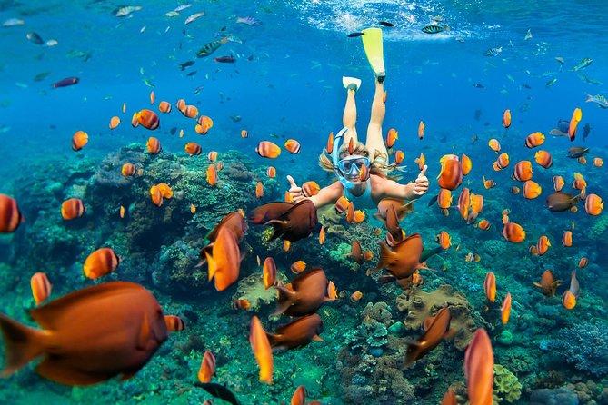 Kealakekua Bay: Captain Cook Reef Snorkel Adventure!