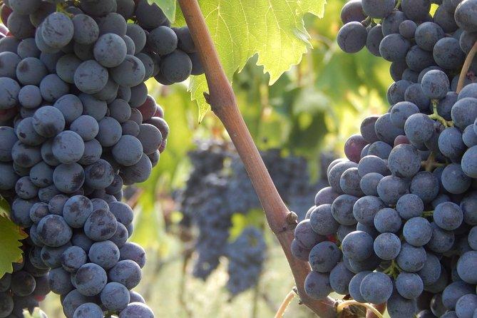 Tour voor vegetariërs in Toscane - Chianti wijn en biologisch voedsel uit Florence