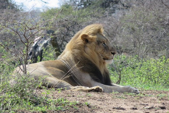 Full-Day Hluhluwe Imfolozi Park Big Five Game Drive