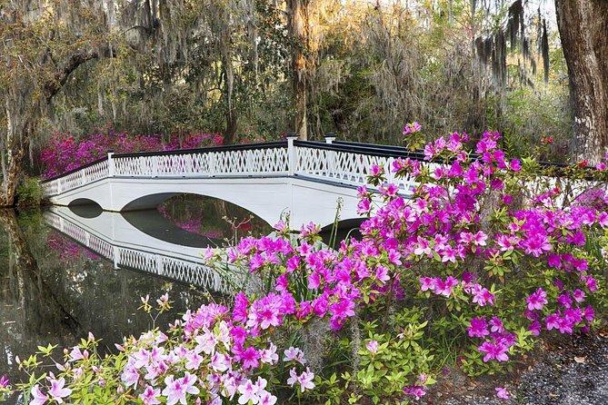 Magnolia Plantation Admission & Tour with Transportation from Charleston