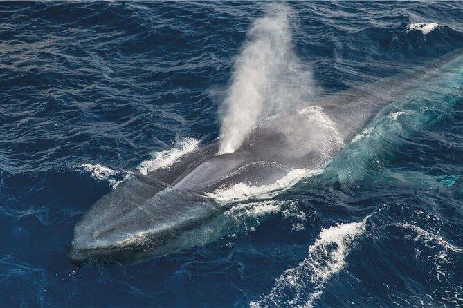 Avistamiento de ballenas y jeep