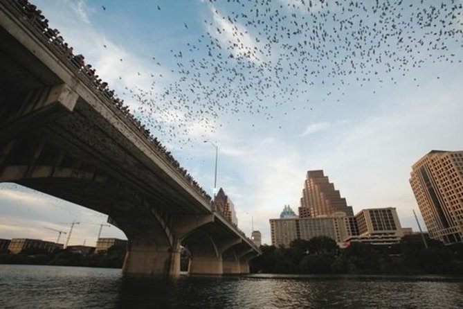 Bats Under Congress Avenue Bridge