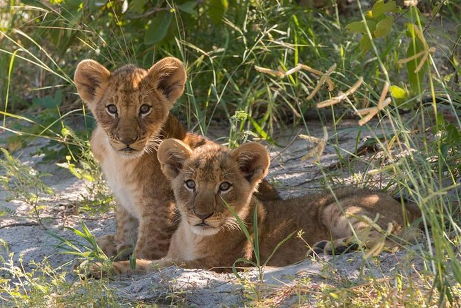 4 Days Victoria Falls Zimbabwe with Chobe National Park Safari Botswana and Livingstone Zambia