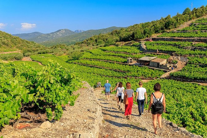 Small-Group Food & Wine Tasting Experience from Dubrovnik