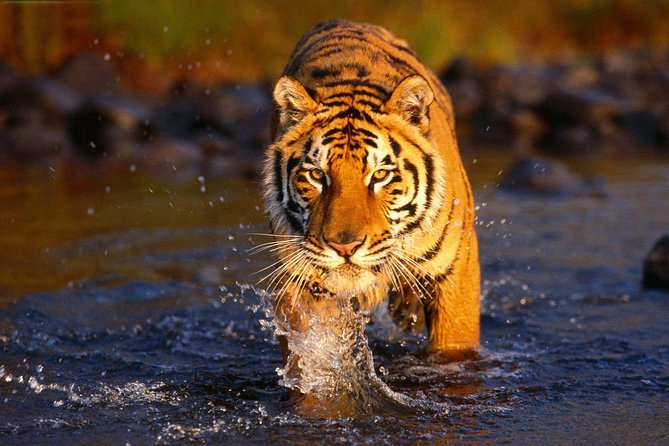 Private 3-Day Ranthambore National Park Tour from Delhi