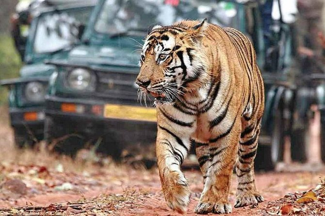 One-Way Private Transfer from Agra to Ranthambore