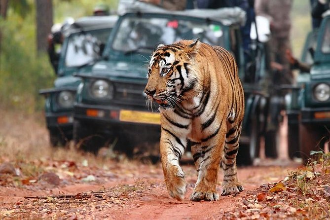 Private Tour: Golden Triangle Tour with Ranthambore from Delhi