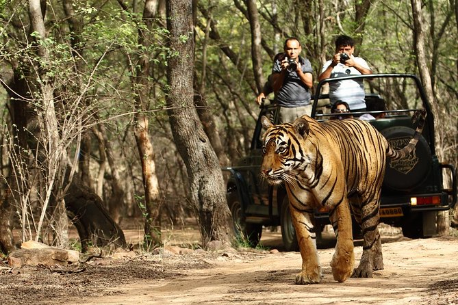 Private Tour: Golden Triangle Tour with Ranthambore