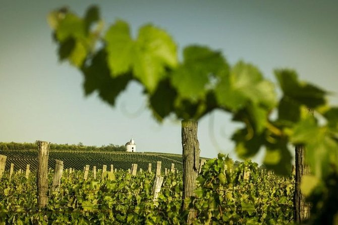 Full-day tour of Tokaj - The World's First Closed Wine Region