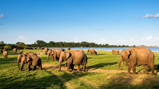 Best Srilanka Attractions in 3 Days