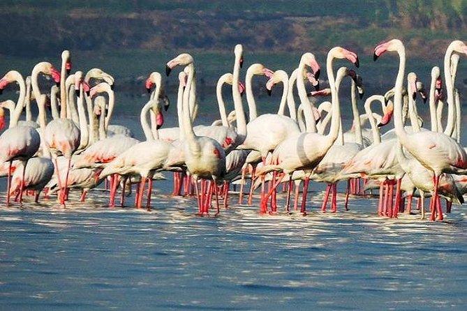 Bird Watching Tour at Bhandup, Mumbai with Brunch