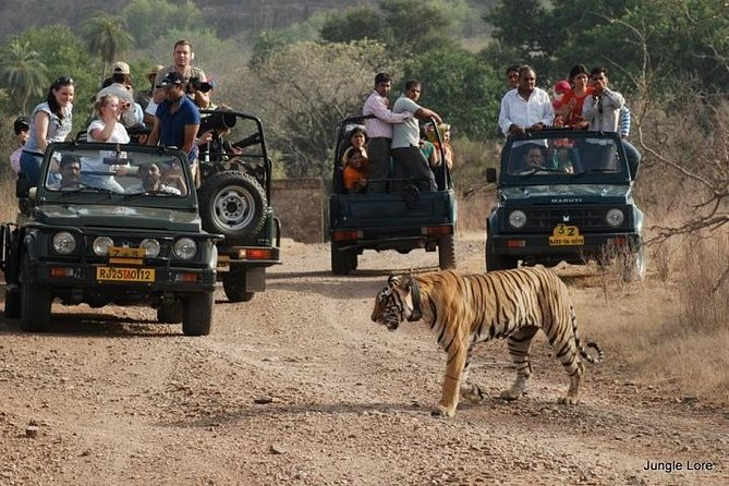 7-Night Private Tour of India's Golden Triangle, Palaces, and Tigers photo 3