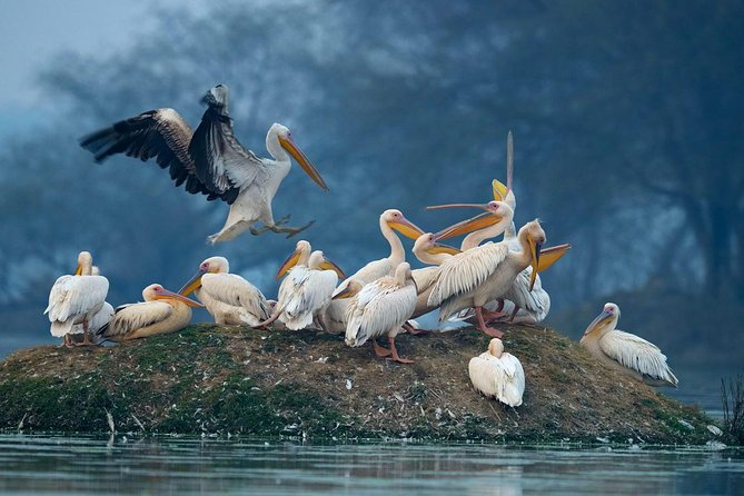 Private Day Trip to Keoladeo Bird Sanctuary and Chand Baori Stepwell Including Lunch and Gala Dinner