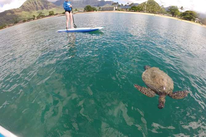 Surf HNL: Pokai Bay Stand-up Paddleboard Lesson (Ko'olina)