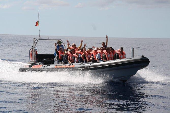 Excursión de avistamiento de ballenas y delfines desde Funchal