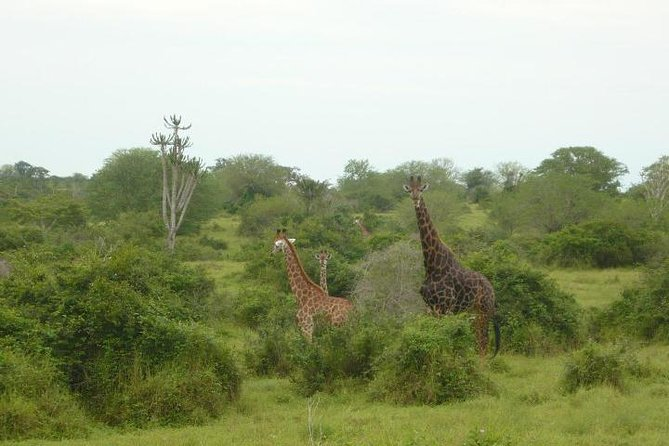 Day tour from Luanda to Kissama National Park