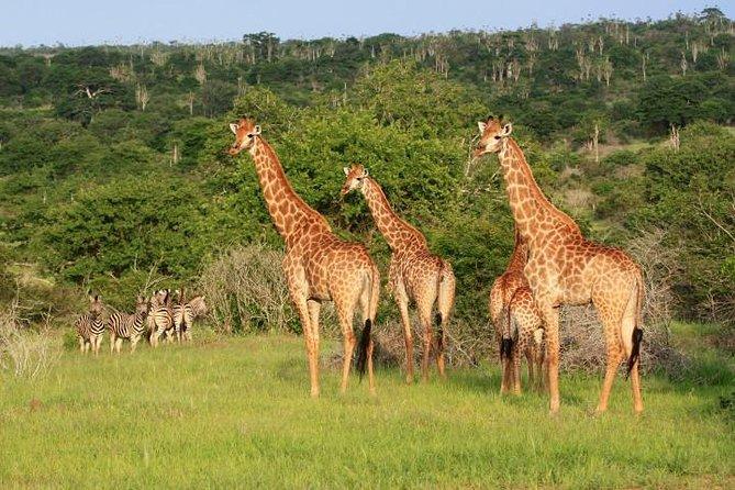 Angola Essential Odyssey: Luanda - Kissama Park Kwanza River - Kalandula Falls, Luanda, ANGOLA