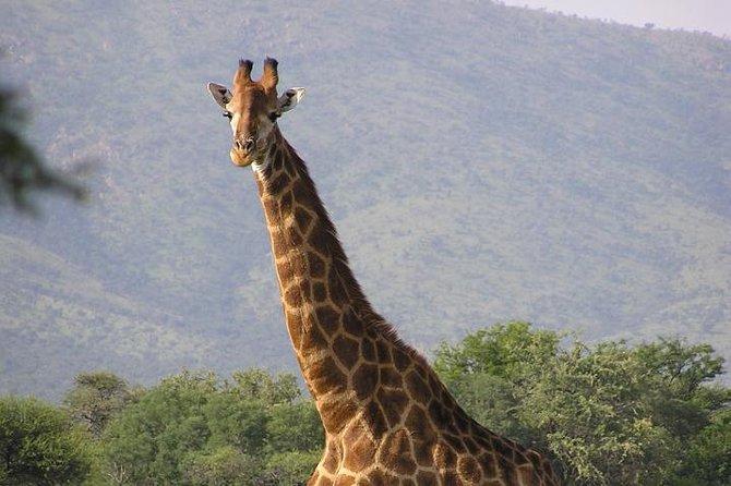 Maputo Special Reserve