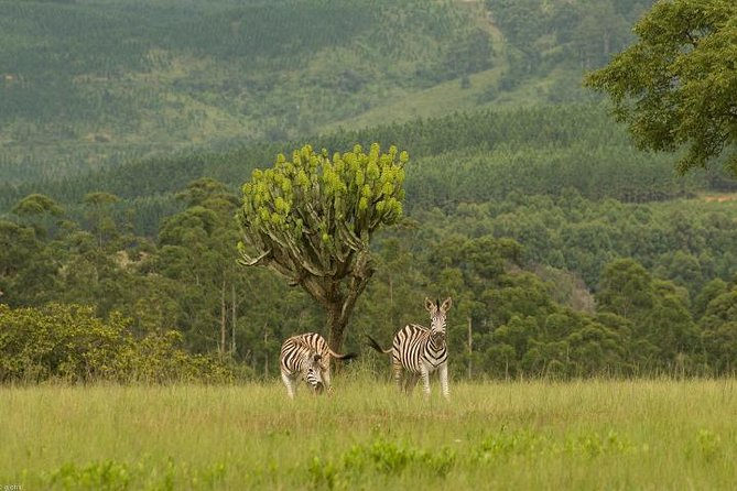 Swaziland Culture and Mlilwane Wildlife Sanctuary - 2 Days