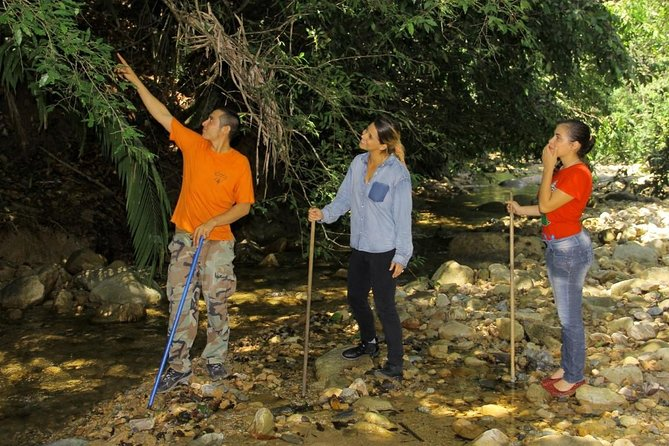 Puerto Vallarta Shore Excursion: Hiking Adventure Tour