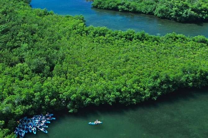 Best of Mangrove Lagoon Kayak, Hike and Snorkel Adventure with Picnic Lunch