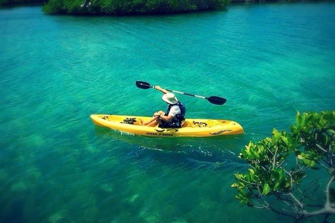 On Your Own: Kayak in the Mangrove Lagoon