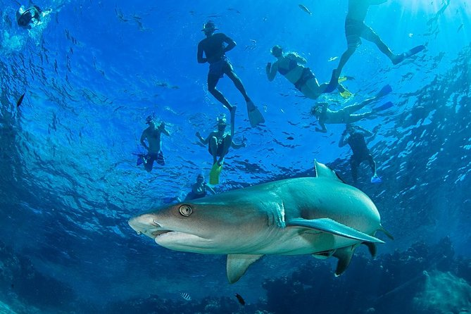 Ultimate Snorkel with Sharks Encounter in Fiji