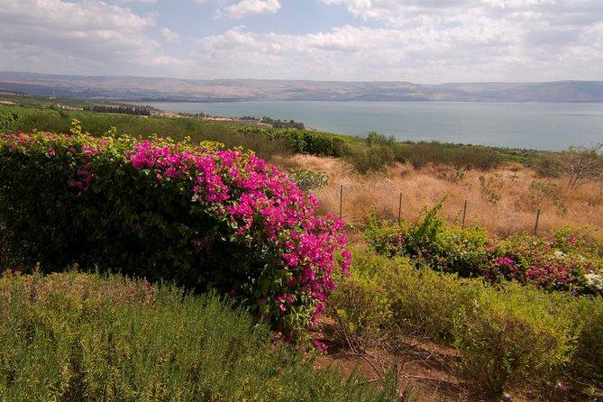 Haifa Shore Excursion: Nazareth and Sea of Galilee