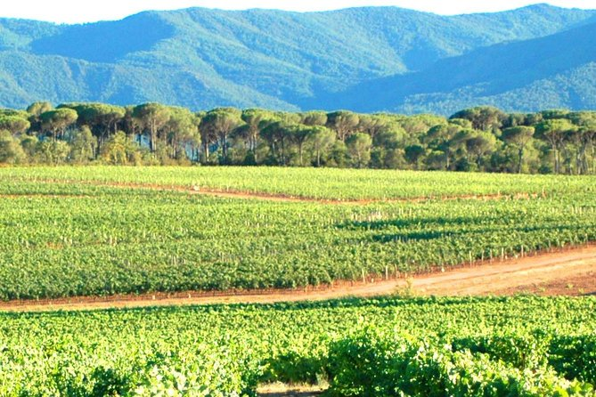 Full-Day Wine Tour around Aix en Provence from Marseille
