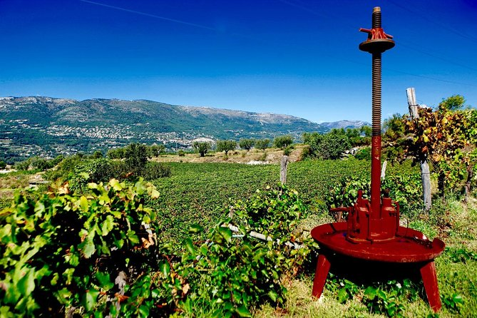 Half-day Wine Tour in Bellet wine region from Nice