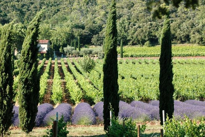 Half day Wine Tour in Coteaux d'Aix and Luberon from Aix en Provence