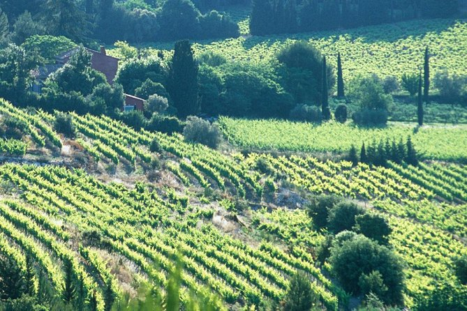 Full-day Wine Tour around Bandol & Cassis from Marseille