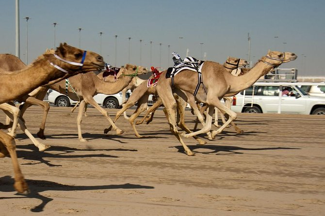Shahania Camel Race Track Tour