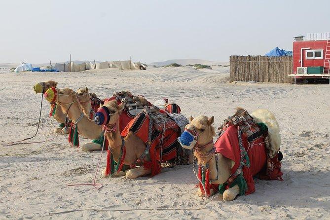 South Coast Tour with Camel Ride