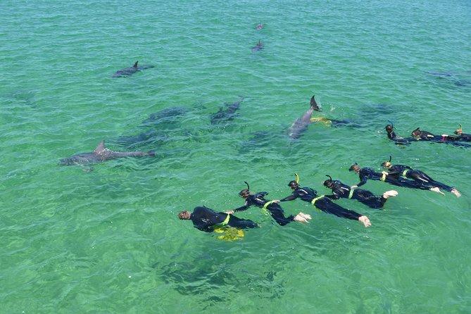 Swim With Dolphins Day Trip
