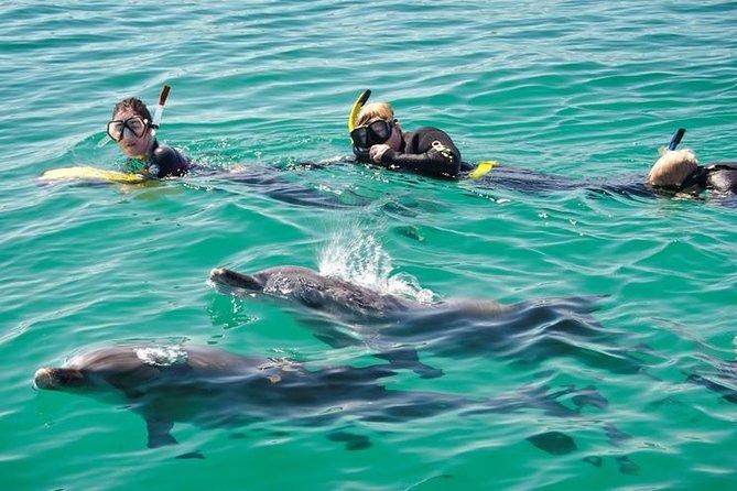 Excursion d'une journée de nage avec les dauphins au départ de Perth