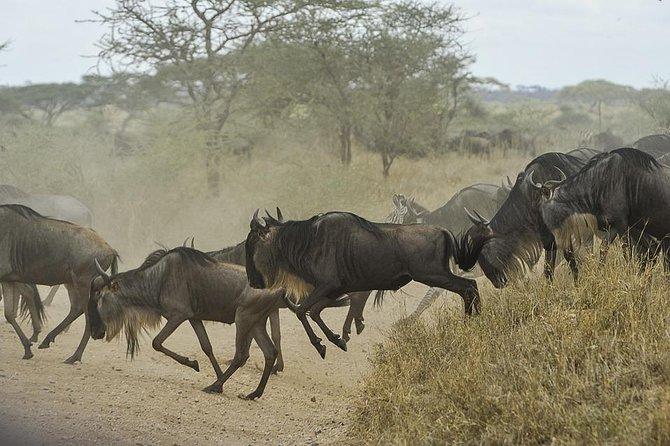 Migration Safari - East Africa